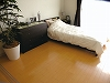 Model room bed room